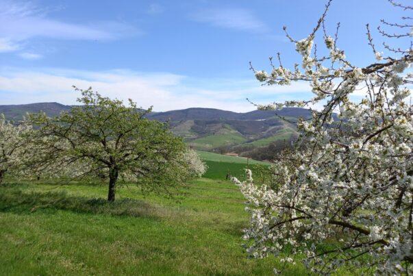 Vacances de printemps dans les Monts du Lyonnais