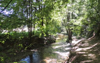 Mes 8 idées de sites ombragés au bord de l'eau